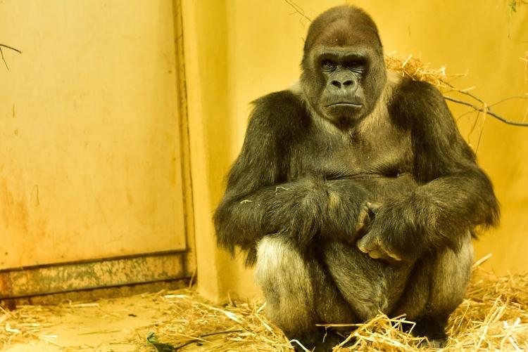 Affe Praxiskurs Zoo